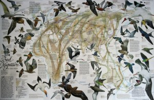 Migration Map ex NatGeo