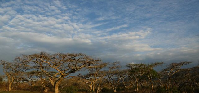 Trees of South Africa on Durbans Golden Mile
