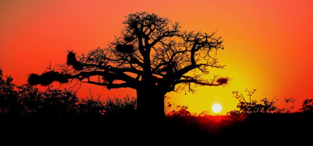 Sunrise and Sunsets – Africa's Natural Heritage